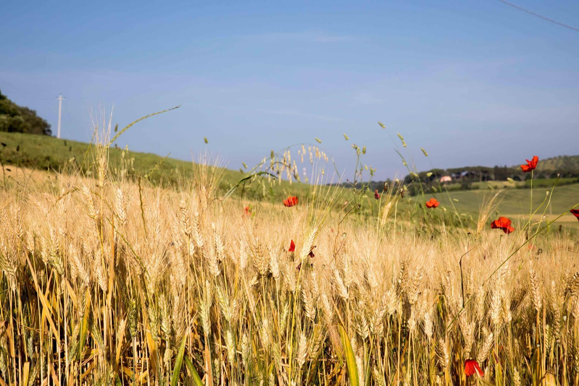 Chi Siamo – Azienda Agricola